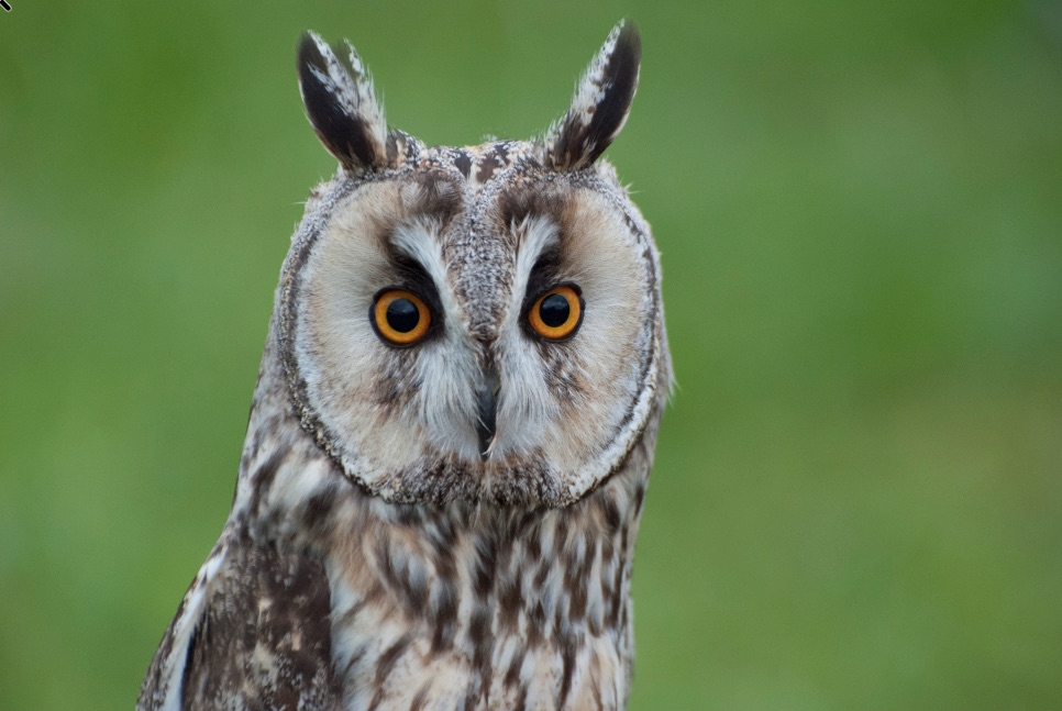 01 - Magic Wand - Owl