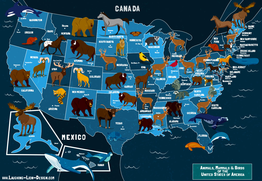 usa animals map illustrated by jennifer farley