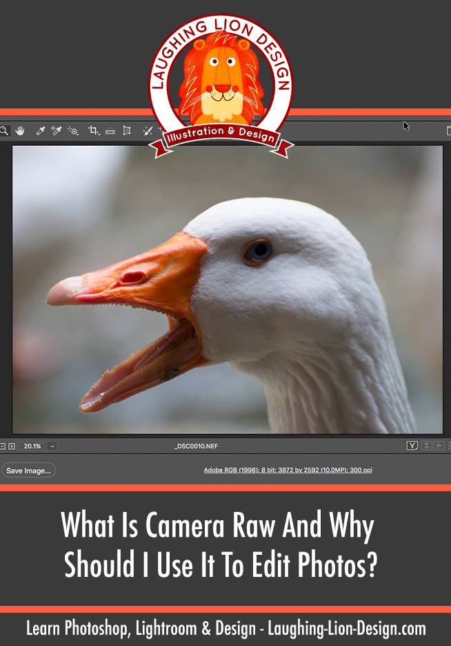 What-Is-Camera-Raw-And-Why-Should-I-Use-It